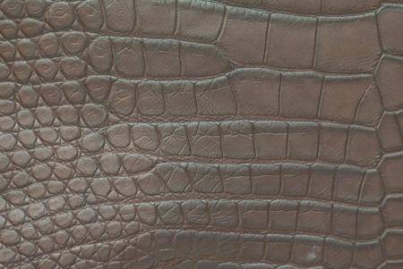 Freshwater crocodile belly skin texture background. photo