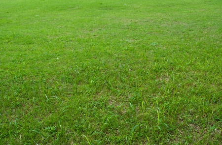 Green grass texture background field. photo