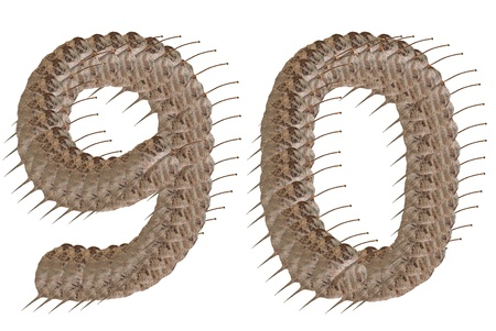 Dried leaf number 9 0 alphabet character. Stock Photo - 11500868