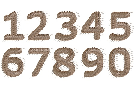 Dried leaf number 1-10 alphabet character. Stock Photo - 11500863