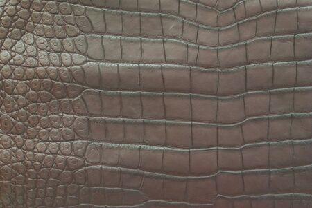 Freshwater crocodile belly skin texture background. Stock Photo - 11500985