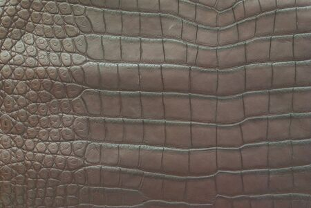Freshwater crocodile belly skin texture background. Stock Photo - 11500985