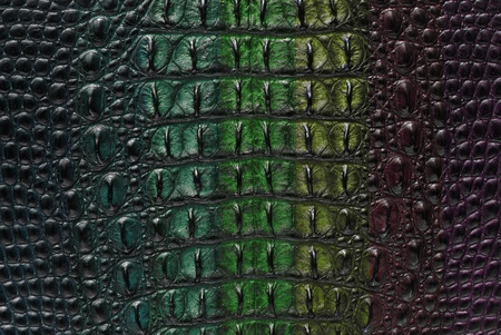 Freshwater crocodile bone skin texture background. Stock Photo - 11501009