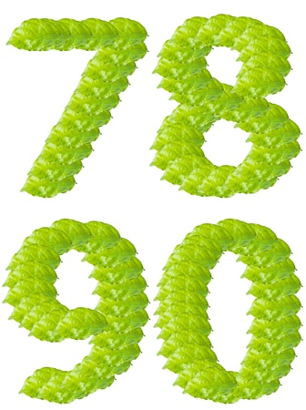 Green leaf7 8 9 0 number alphabet character. photo