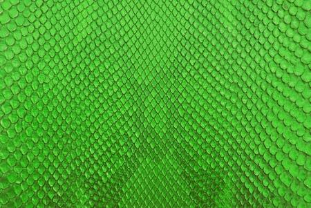 Green python snake skin texture background. photo