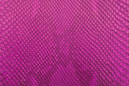 Pink python snake skin texture background. photo