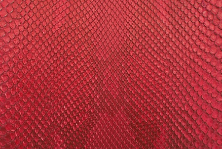 Red python snake skin texture background. photo