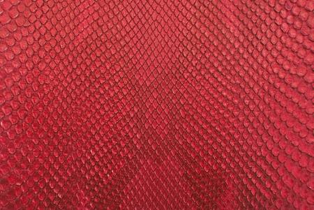 peau cuir: Rouge serpent peau de python texture de fond. Banque d'images