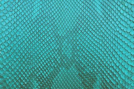 Turqouise python snake skin texture background. Stock Photo
