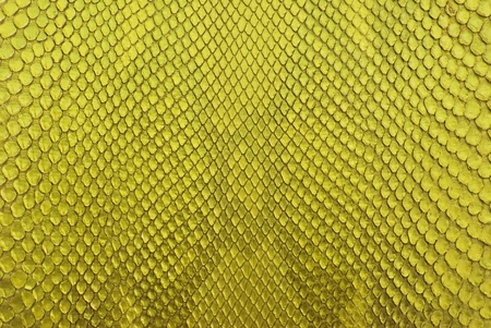 Yellow python snake skin texture background. photo