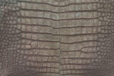 Frischwasserkrokodil Bauchhaut Textur Hintergrund.