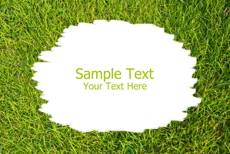 Green grass texture background photo