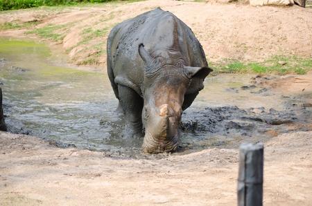 Rhino in the park. photo