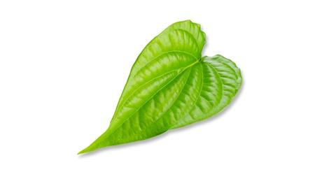 betelnut: Green betel leaf isolated on the white background.