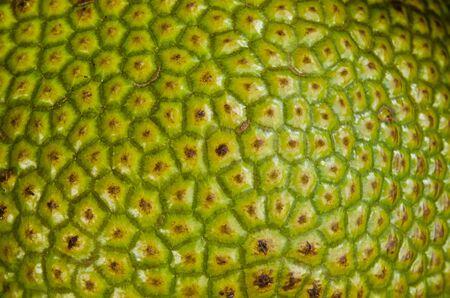 Jackfruit Texture. photo