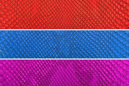 Set of Colorful python snake skin texture background  photo