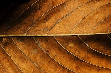 Textura de las hojas secas