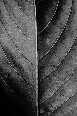 tobacco plants: Dried leaf texture