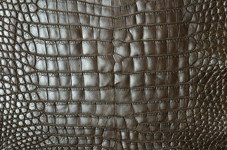 Vintage crocodile skin texture Stock Photo - 13230914