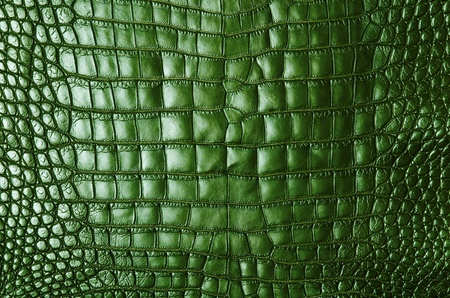 Vintage green crocodile skin texture  photo