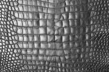 Vintage grey crocodile skin texture  photo