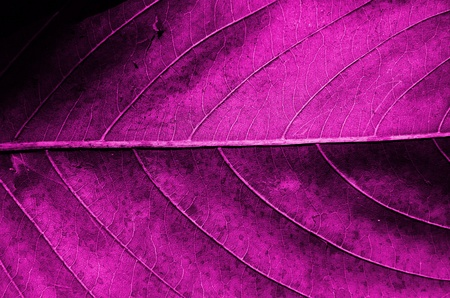 Pink dried leaf texture  Stock Photo - 13230908