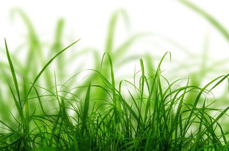 Green grass texture in the nature  Stock Photo - 13230869