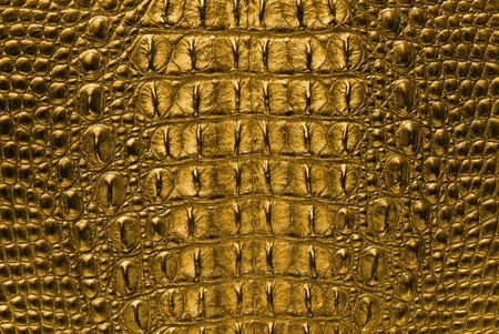 the reptile: Gold Crocodile bone skin texture background  Stock Photo