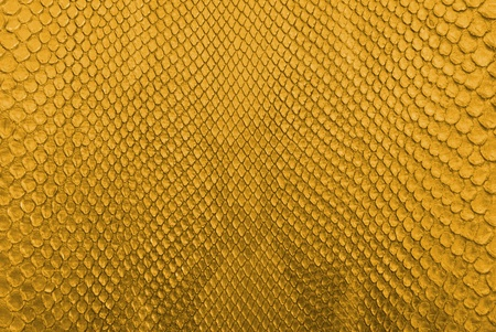 Gold python snake skin texture background  photo