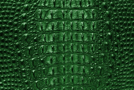 snake skin: Green Crocodile bone skin texture background