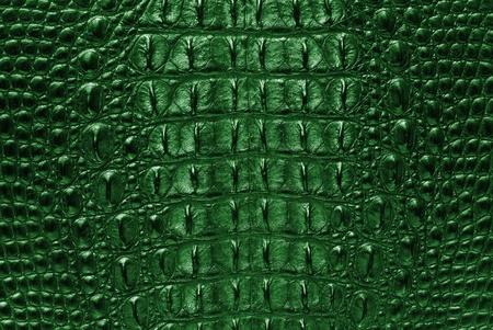 Green Crocodile bone skin texture background
