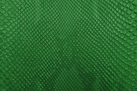 color scale: Green python snake skin texture background