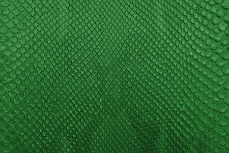 piel morena: Verde serpiente pit�n de piel de textura de fondo