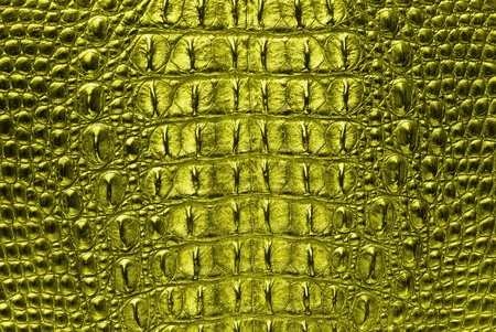 yellow Crocodile bone skin texture background  photo