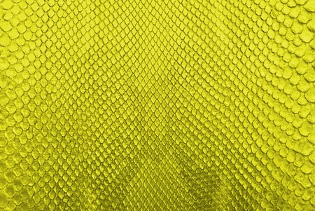 Yellow python snake skin texture background