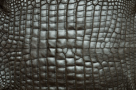 Vintage crocodile skin texture  photo