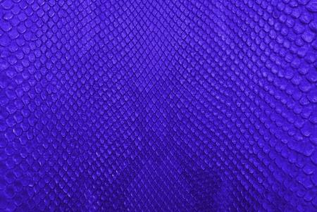 Blue python snake skin texture background  Stock Photo - 13284830