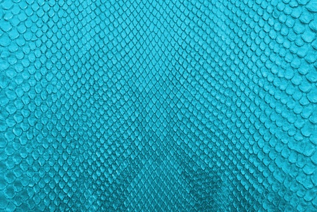 Blue python snake skin texture background  Stock Photo