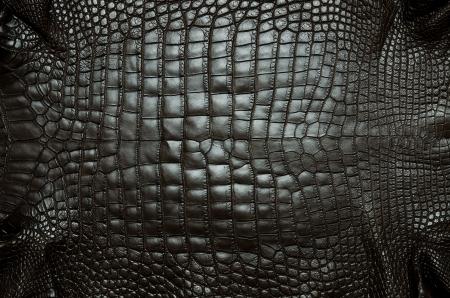 Vintage crocodile belly skin texture background  photo