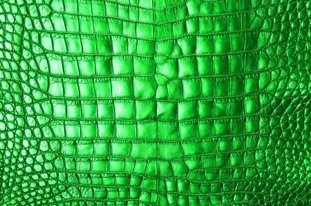 Vintage green crocodile skin texture  photo