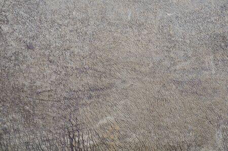 Rhino skin texture background  Stock Photo - 14269926