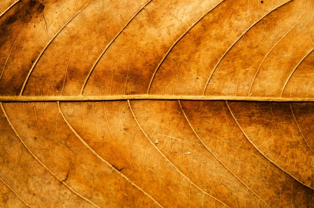 Dried leaf texture background