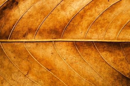 the dry leaves: Hoja seca textura de fondo