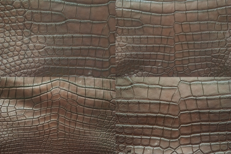 Collection of crocodile skin texture background  photo