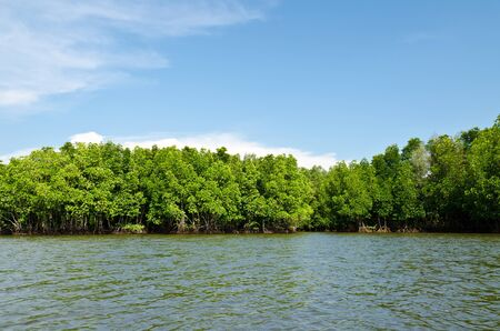Mangrove forest with blue sky field. photo
