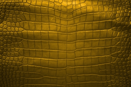 Freshwater crocodile belly skin texture background  photo