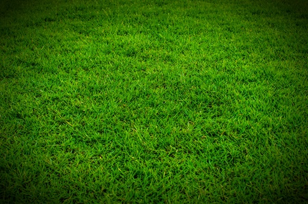 Green grass texture in the nature  photo