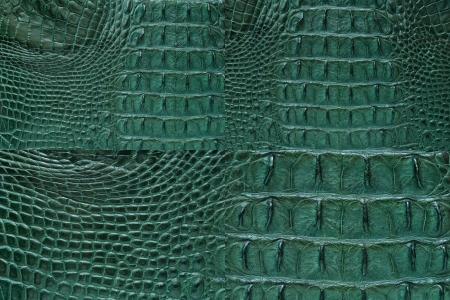 Set of Green Crocodile bone skin texture background  photo