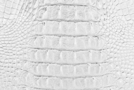 White Crocodile Skin Texture Background  photo