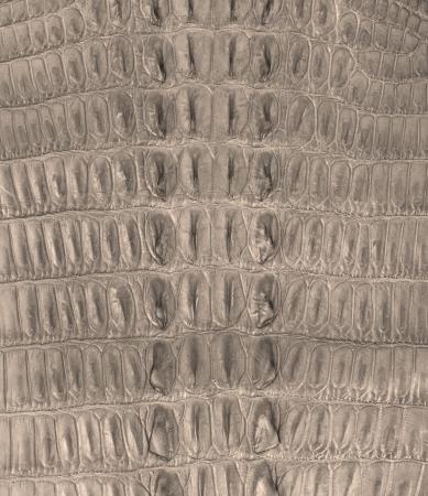 Crocodile bone skin texture background Stock Photo - 17729447